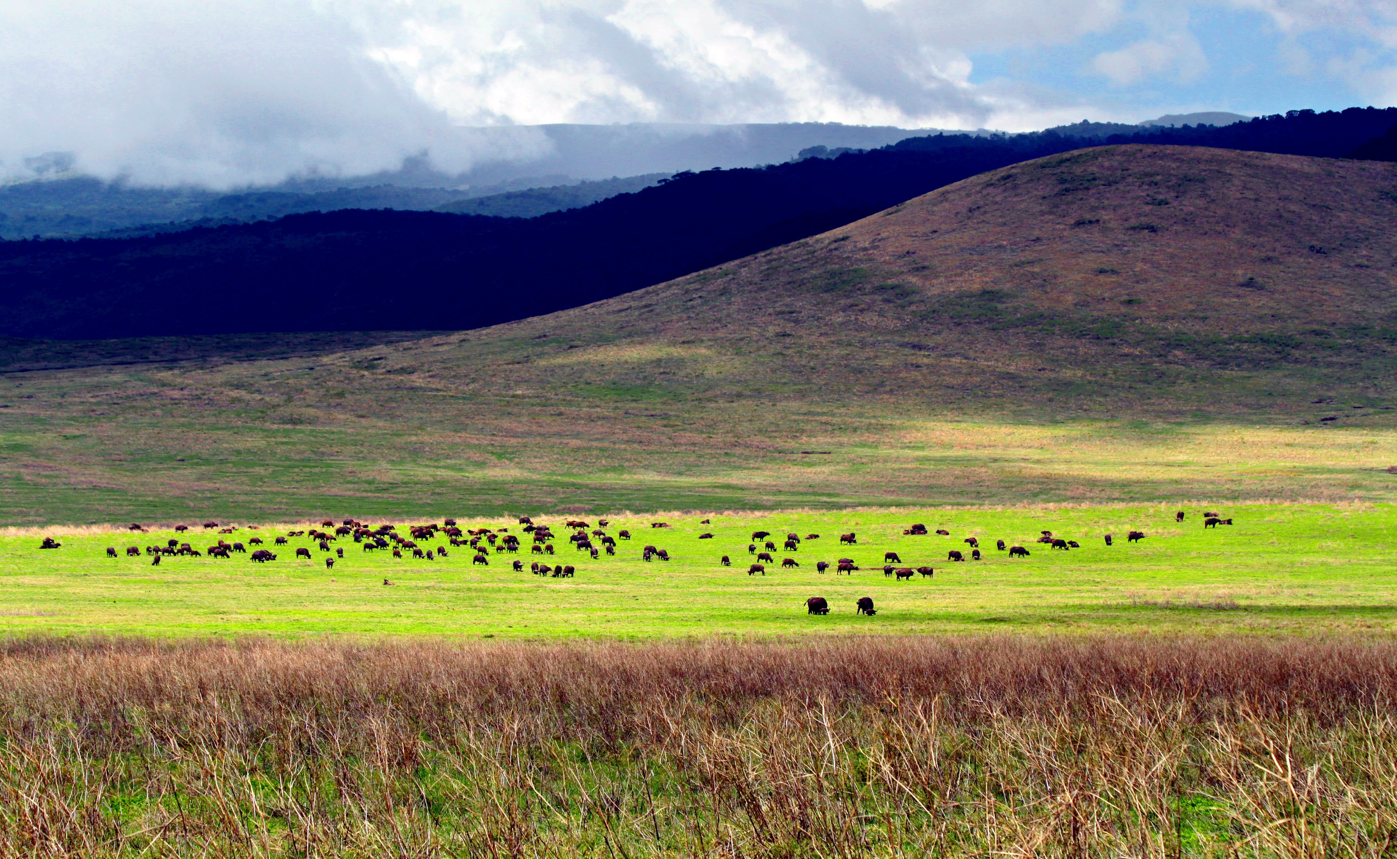 cratere-del-ngorongoro-tanzania