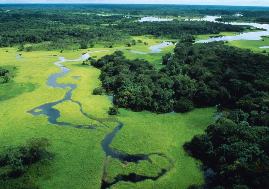 foresta-amazzonica-brasile-7-milioni-di-km%c2%b2-di-vegetazione-equatoriale