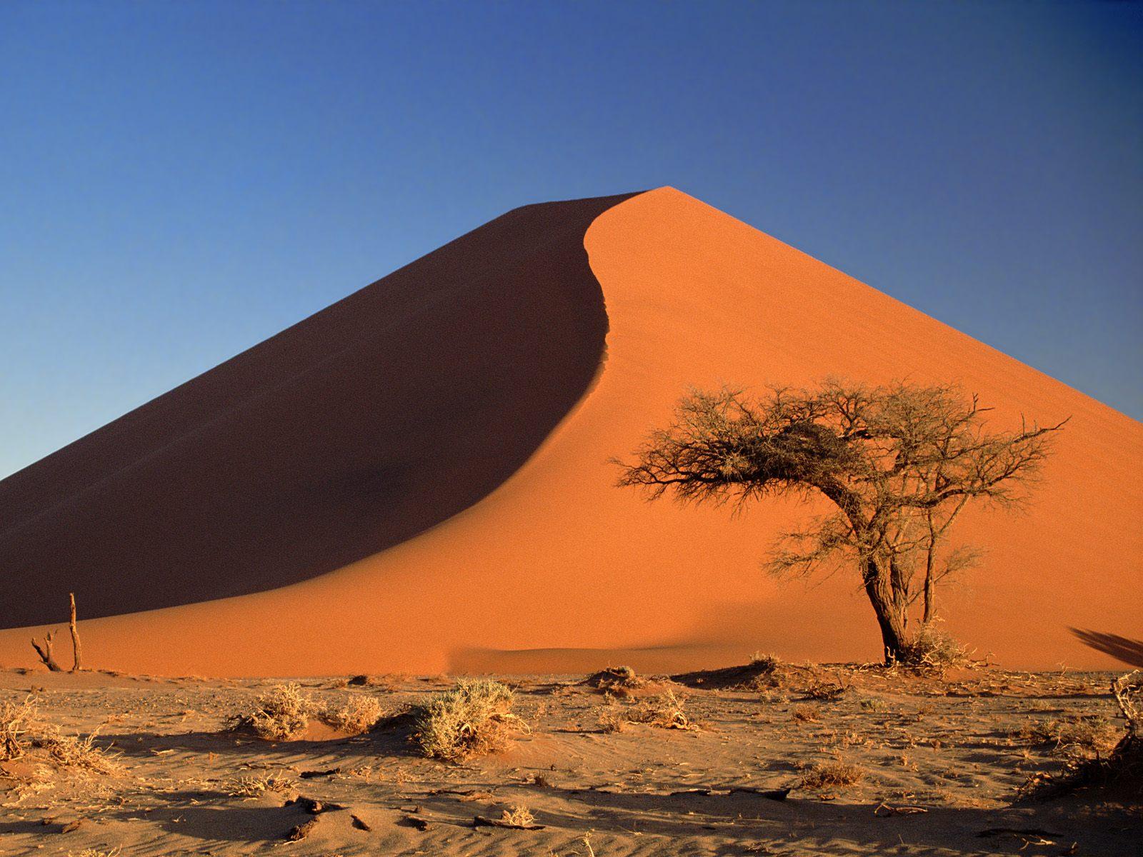 safari-in-namibia