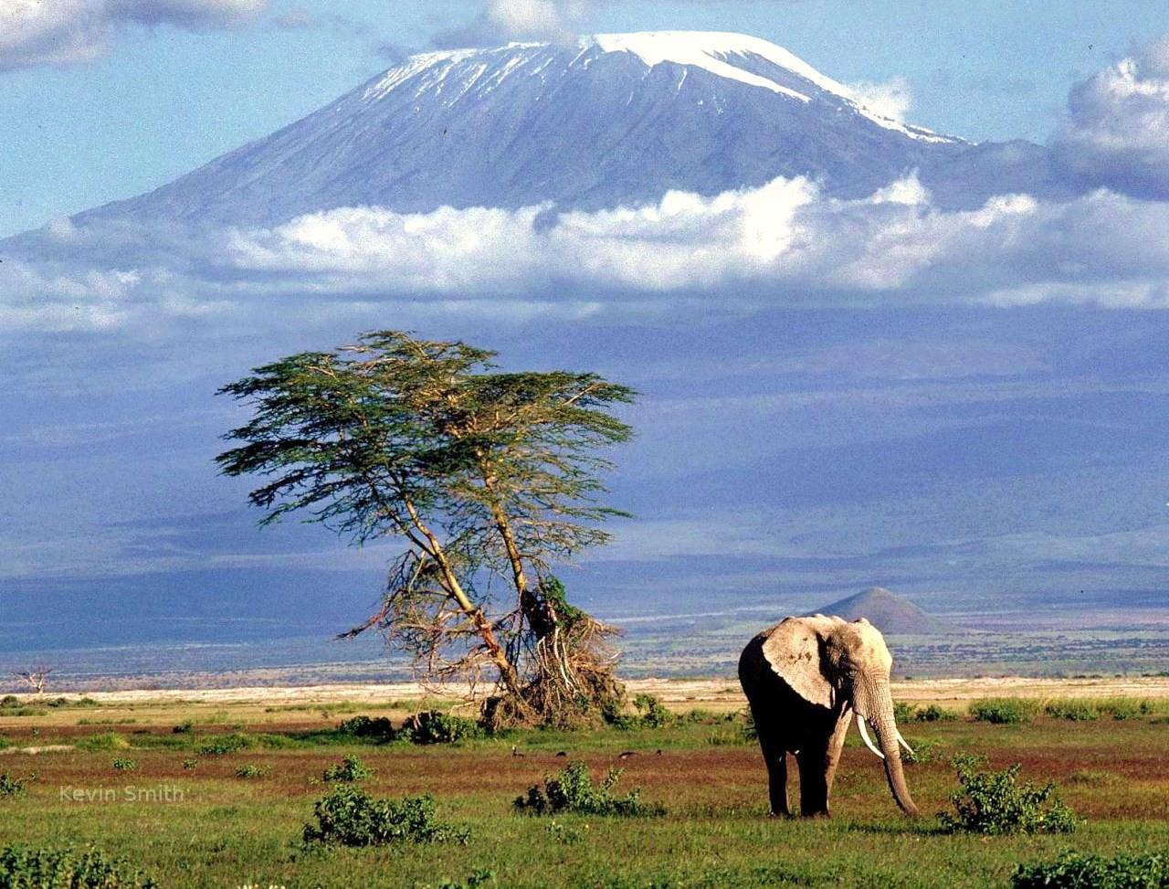 safari-in-africa-in-4x4-kruger-national-park