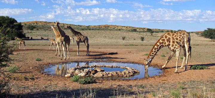 offerte-esclusive-viaggi-di-nozze-sud-africa