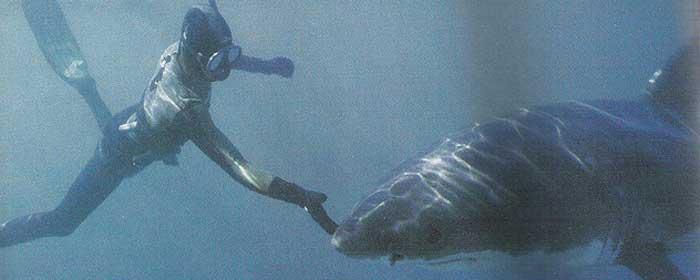 balene-squali-sudafrica