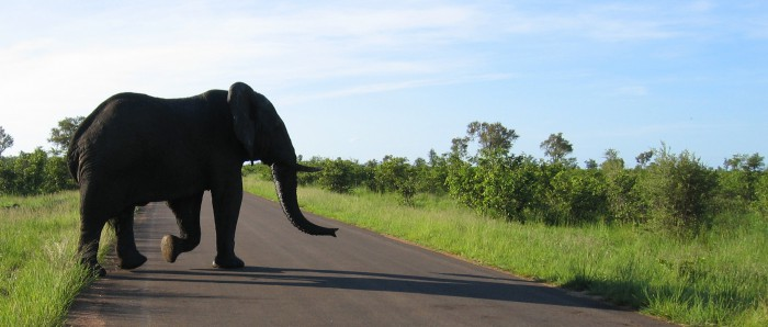 viaggi-in-africa-natura-animali