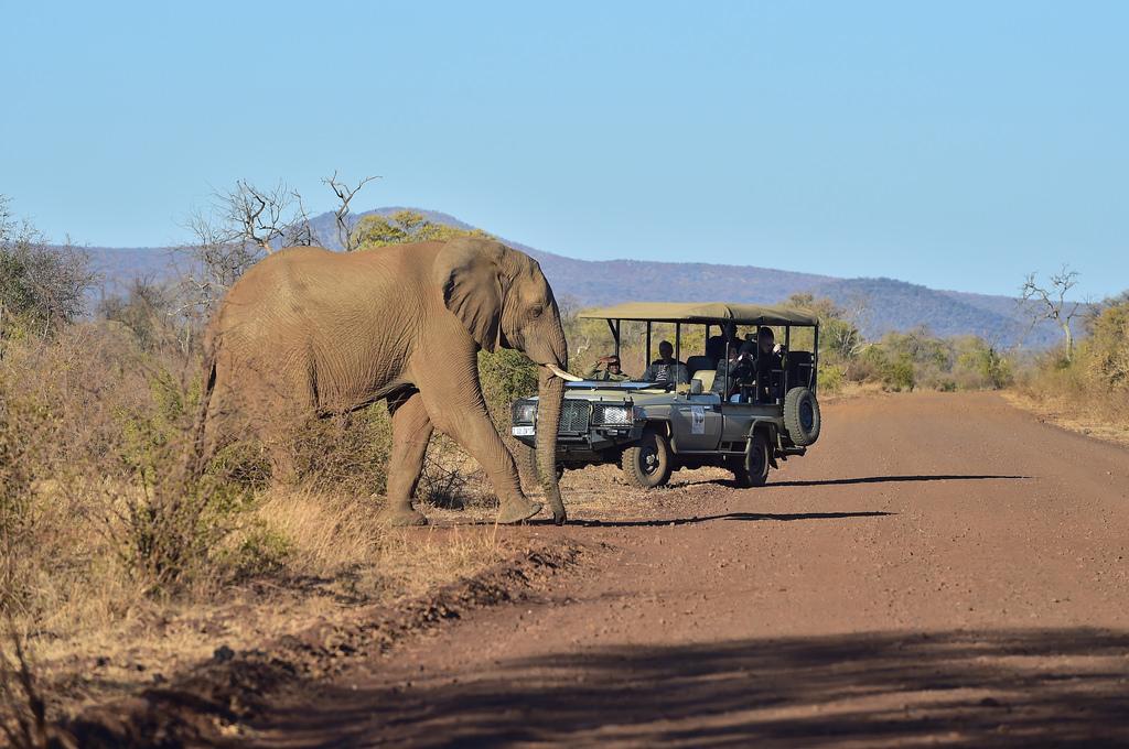 safari-sudafrica-consigli-un-viaggio-indimenticabile