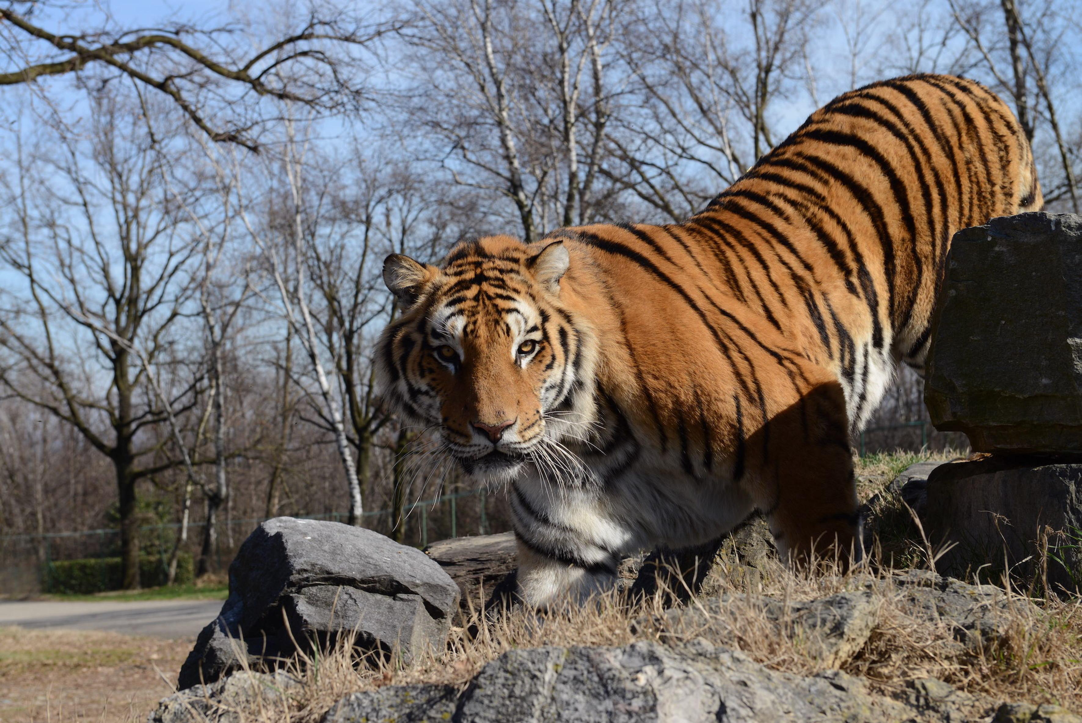 safari-park-pombia-no-ci-si-diverte-giostre-leoni-spettacoli